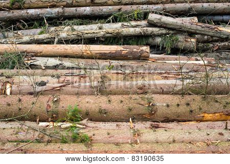 Timber Harvesting. Pile Of Cut Fir Logs