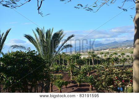 Coastline scene from southern Tenerife .Canary Island. Spain.