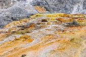 pic of mammoth  - Travertine terraces at Mammoth Hot Springs - JPG