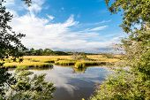 pic of marshes  - Brilliant Green Wetland Marsh Grass Growing Under Blue October Skies - JPG