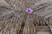 pic of oleander  - Pink The Oleander Flower Background Textures pastel - JPG
