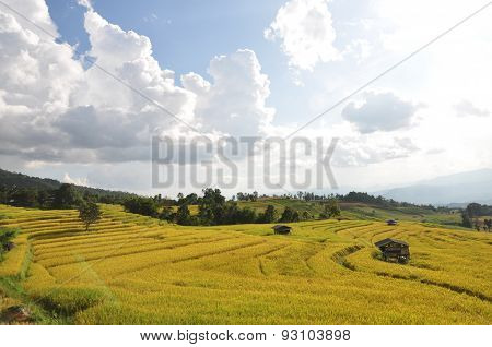 The paddy fields Pak bung pang chiangmai