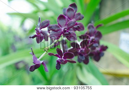 Orchid Flower, Spring Background