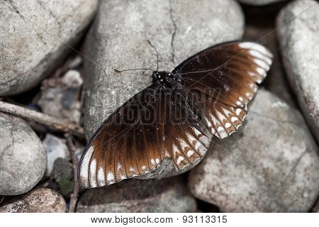 Beautiful Brown Butterfly On The Gray Stone Background