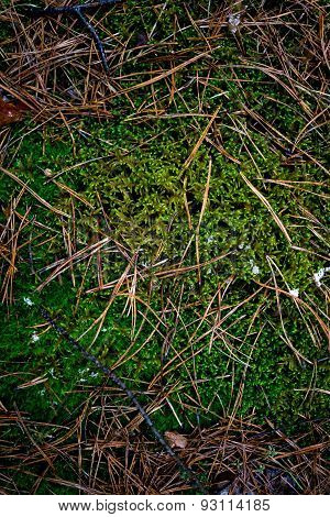 Texture Of Fresh Grass And Moss Growing At Forest
