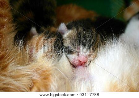 Cat nursing her newborn kittens