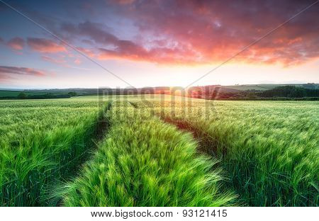Stunning Sunrise Over Fields