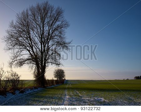 Green Field Covered With Light Snow