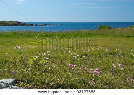 Heath seaside beach landscape