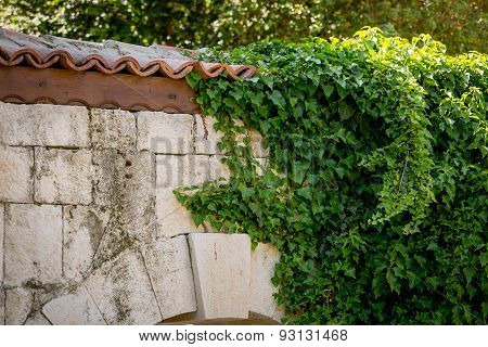 Ivy Leaves On Old Stone Wall With Tiled Roof