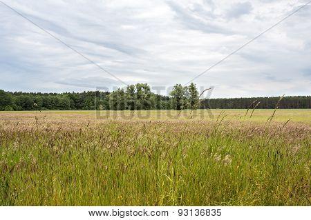 Rural landscape in East Germany, Uckermark, in summer