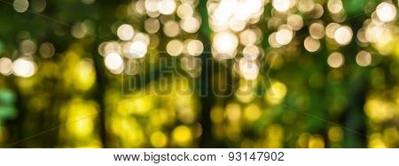 Bokeh Defocused Forest Background