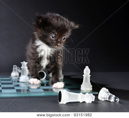Kitten Looking At Glass Chess Board With  Pieces