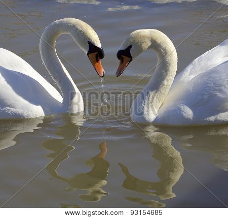 Swans. Love. Heart.