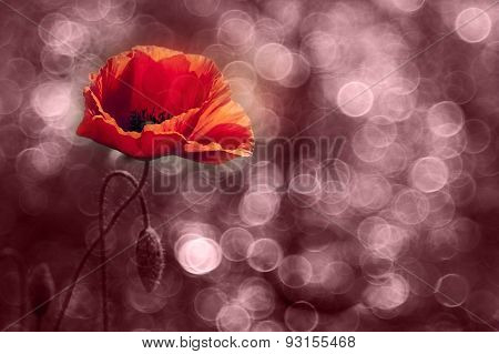 Abstract Red Wild Poppy