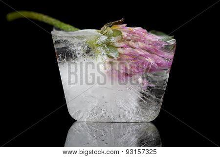 Flower frozen
