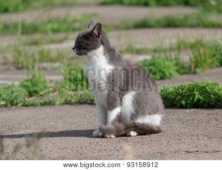Homeless Gray Cat Basking In The Sun