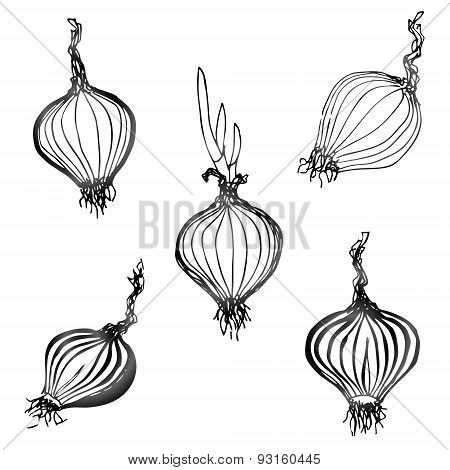 Set Of Hand Drawn Onion Images