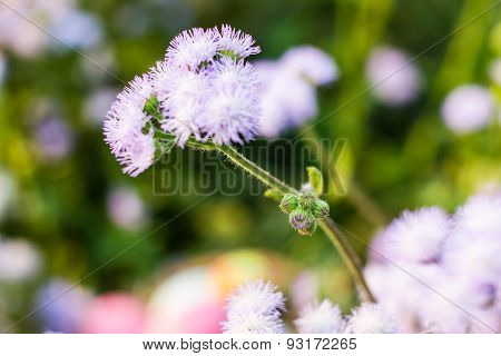 Blue Cornflower On A Background Of Grass And Other Cornflowers