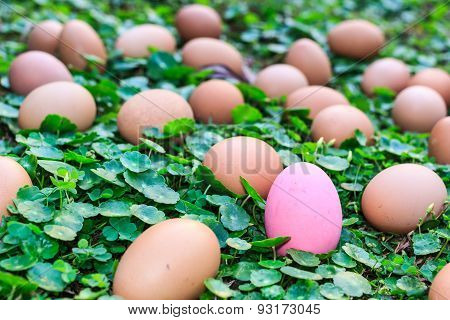 Easter Eggs In A Field Of Grass