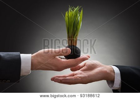 Businessperson Giving Sapling To The Businessman