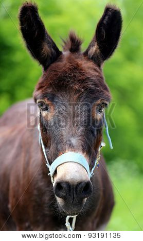 Beautiful Portrait Of A Donkey