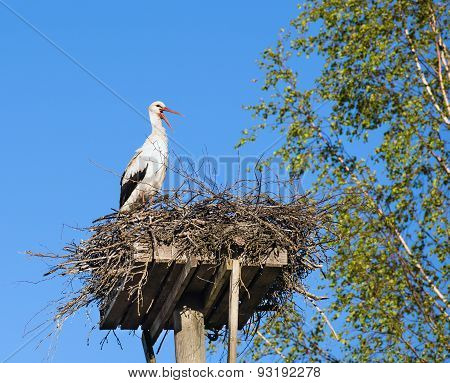 White Stork (ciconia Ciconia) Standing On The Nest