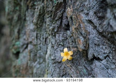 Fallen Flower Stay On Tree Trunk