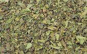 pic of nettle  - Closeup of dried nettle as background - JPG