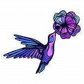 picture of colibri  - Flying tropical hummingbird on white background with flower - JPG