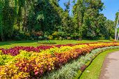 picture of royal botanic gardens  - Multicolored alley of flowers and trees on a sunny day in the Royal Botanic Gardens Kandy - JPG