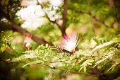 stock photo of tamarind  - Tamarind flower background blurred - JPG