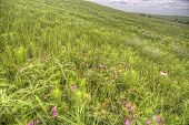 image of tallgrass  - spring grasses and wildflowers - JPG
