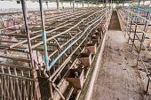 stock photo of pig-breeding  - long exposure image of indoor dirty pig farm with paddock  - JPG