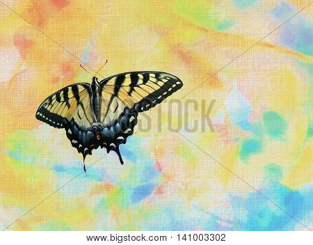Old World Swallowtail butterfly on a colourful background with waterdrops and copy space.