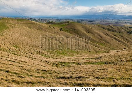 grasslands at Wither Hills in New Zealand