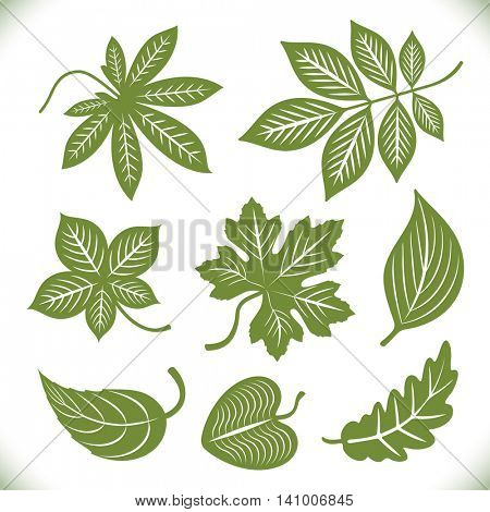 Green leaves shapes vector set isolated on white background. Leaf outlines to use as brushes or design elements.