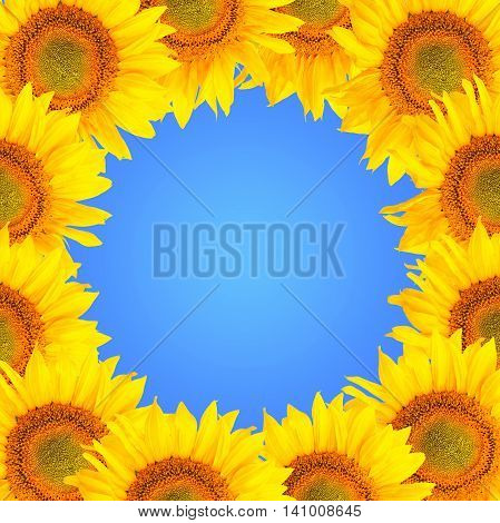 Sunflower Background. Sunflower Flowers Over Blue Background. Frame With Sunflowers.