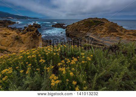 Northern Coastal Scrub Point Lobos State Park California