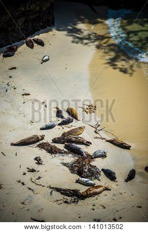 Seals On The Beach
