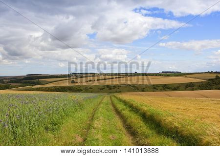 Summer Agricultural Scenery