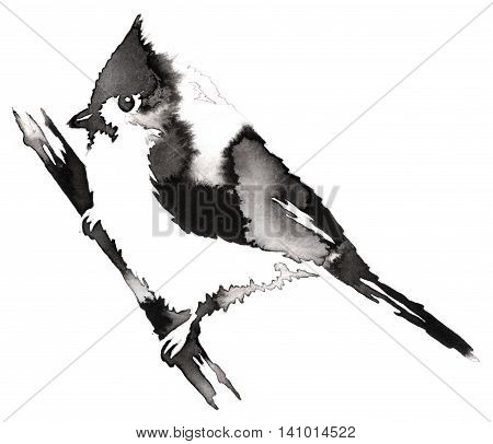 black and white painting with water and ink draw cardinal bird illustration