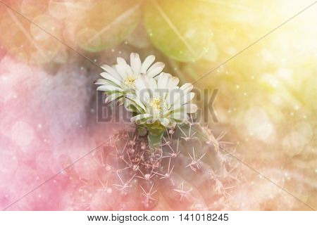 Cactus Flowers In Soft Pink Orange Dreamy Bokeh Nature Background