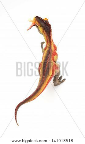 top view Giganotosaurus catching a small dinosaur toy on white background