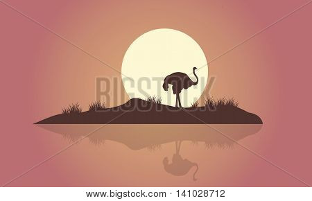 Silhouette of Ostrich scenery with reflection at the morning