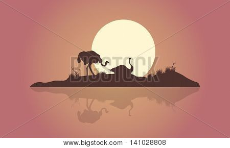 Silhouette of two Ostrich and reflection scenery illustration