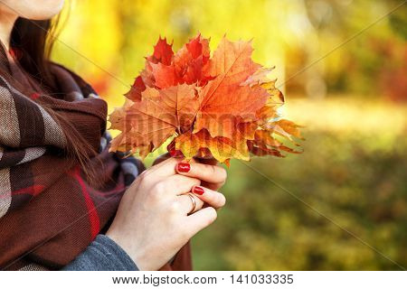 Bright bouquet of autumn maple leaves in female hands on a background of autumn nature