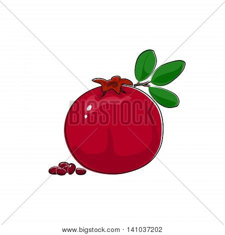 Pomegranate Isolated on White, Tropical Fruit Pomegranate, Vector Illustration