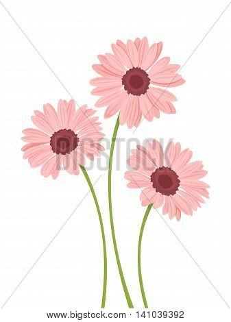Three vector pink gerbera flowers with stems isolated on a white background.