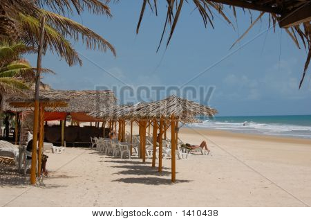 Tropical Beach In Pipa Brasil